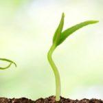 Coaching, groei, zelfertrouwen